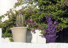 在一个罐的地球仙人掌有橄榄树紫色雕塑的与紫色九重葛的在背景中 免版税库存照片