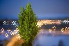 在一个罐的小活圣诞树在bokeh背景 bokeh雪花 免版税库存照片