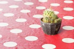 在一个罐的小仙人掌在红色桌布 免版税图库摄影