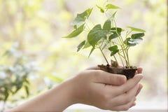 在一个罐的新芽在手上 免版税库存图片