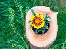 在一个罐的明亮的花在树桩 免版税库存图片