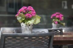 在一个罐的绯红色kalanchoe在桌上作为在街道咖啡馆的桌装饰 免版税库存照片