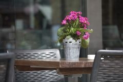 在一个罐的绯红色kalanchoe在桌上作为在街道咖啡馆的桌装饰 免版税图库摄影