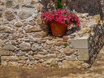 在一个罐的花在古老石墙背景  库存图片