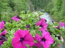 在一个罐的装饰紫罗兰色花在桥梁 库存图片