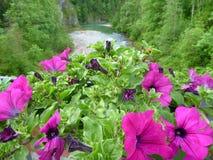 在一个罐的装饰紫罗兰色花在桥梁 图库摄影