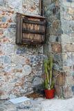 在一个罐的仙人掌在街道上 免版税库存照片