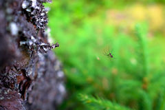 在一个网的蜘蛛在森林特写镜头 免版税库存照片
