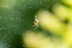 在一个网的蜘蛛本质上 免版税库存照片