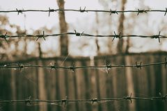在一个网的铁丝网在木篱芭的背景上,乌贼属照片 免版税库存图片