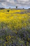 在一个美丽和用花装饰的草甸的树 图库摄影