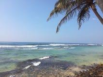 在一个美丽的海滩的一棵棕榈树 库存照片