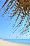 在一个美丽的海滩的热带伞 库存照片
