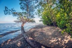 在一个美丽的湖的岸的早晨,风景 图库摄影