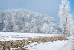 在一个美好的冷的冬天期间,冰冷的树 库存照片