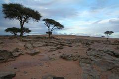 在一个美好的岩石简单的风景的被隔绝的树 库存图片