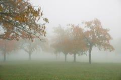 在一个美好的有雾的领域的黄色和红色树 免版税库存照片