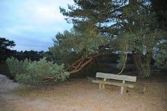 在一个美好的风景的长木凳 免版税图库摄影