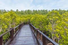 在一个美洲红树森林中间的一个木桥有美丽的天空的 免版税库存照片