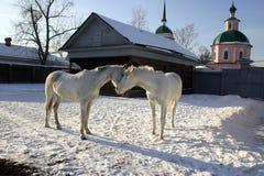 在一个老农庄的马 免版税图库摄影