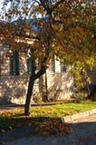 在一个老农村房子的背景的秋天樱桃树 免版税库存照片