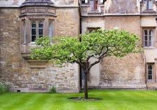 在一个老房子前面的一棵树在牛津,英国 免版税库存图片