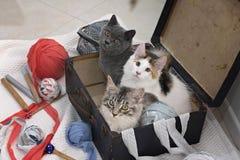 在一个老手提箱的三只小猫 免版税库存照片