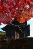 在一个老日本寺庙的美丽的明亮的红色秋天叶子 库存照片