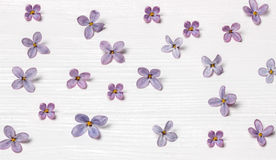 在一个老木板的淡紫色花 免版税库存照片