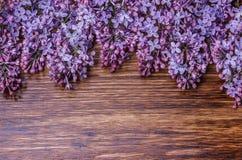 在一个老木板的淡紫色花 库存图片