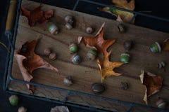 在一个老木盘子、橡子和叶子的秋天构成 土气样式 库存照片