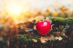 在一个老树桩的红色苹果与青苔和叶子 图库摄影