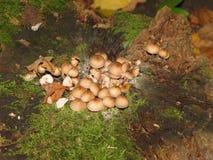 在一个老树桩的蘑菇 库存照片