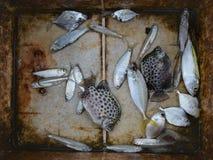 在一个老棕色长方形水池的新鲜的亮光鱼鳕鱼在渔夫市场上江边的高知,喀拉拉,印度 库存图片