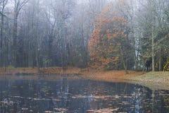 在一个老池塘的有雾的10月早晨 Petrovskoe,血污的Pushkinskie 俄国 免版税库存图片