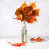 在一个老玻璃瓶的黄色秋天枫叶在轻的背景 免版税库存图片