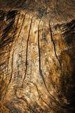 在一个老被风化的树桩的线 免版税库存照片