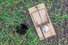 在一个老鼠孔旁边的捕鼠器在草甸 免版税库存图片