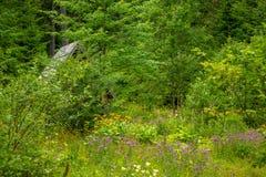 在一个聋森林边缘的老小屋 免版税库存图片