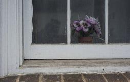 在一个肮脏的窗口后的紫罗兰 库存图片