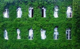 在一个能承受的大厦的绿色墙壁,与门面的垂直的庭院 库存图片