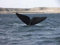 在一个自然端口的鲸鱼 免版税库存图片