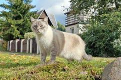 在一个自然设置的一只国家猫寻找老鼠和鸟 免版税库存照片