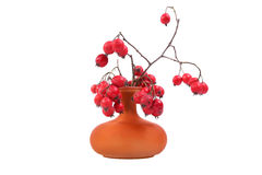 在一个色的花瓶的红色花楸浆果,隔绝在白色背景 图库摄影