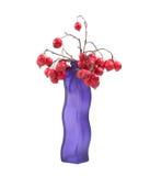 在一个色的花瓶的红色花楸浆果,隔绝在白色背景 库存图片