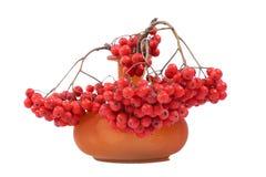在一个色的花瓶的红色花楸浆果,隔绝在白色背景 免版税库存照片