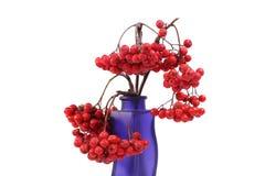 在一个色的花瓶的红色花楸浆果,隔绝在白色背景 库存照片
