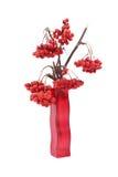 在一个色的花瓶的红色花楸浆果,隔绝在白色背景 免版税库存图片