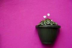 在紫罗兰色墙壁上的花瓶 免版税图库摄影