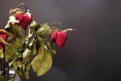 在一个花瓶的干玫瑰在黑背景的木桌上 图库摄影